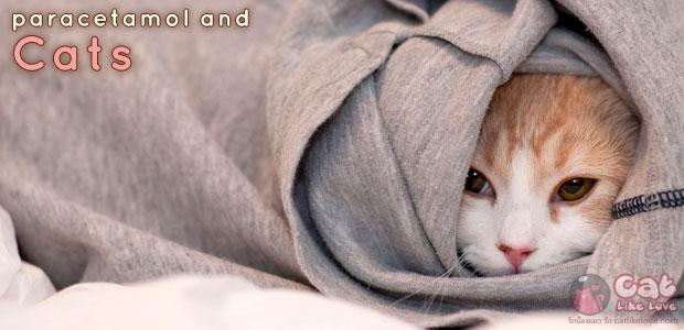 [Knw] อันตรายถึงตาย!!! เมื่อให้น้องแมวกินยาพาราฯ