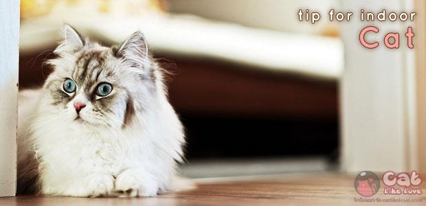 [Tips] เคล็ดลับดูแลน้องแมวที่ชอบอยู่แต่ในบ้าน