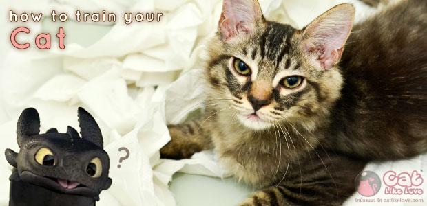 [Tips] มามะ มาฝึกลูกแมวกันดีกว่า!!!