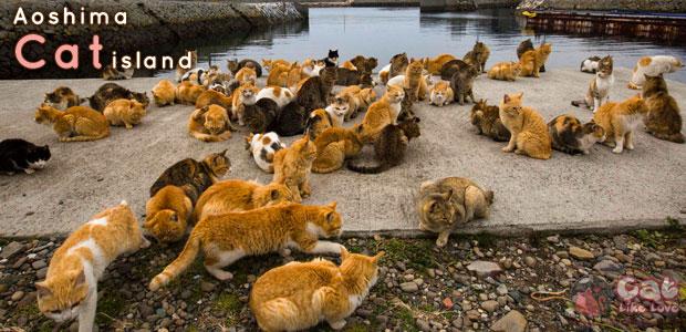 """[Travel] เกาะแมว """"อาโอชิมะ"""" เกาะสวรรค์ของคนรักแมว"""
