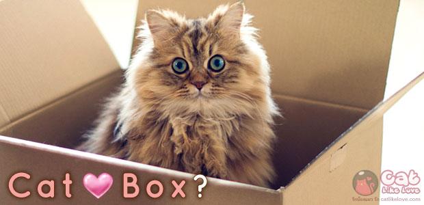 [Knw] อยากรู้จัง??? ทำไมแมวชอบอยู่ในกล่อง!?!