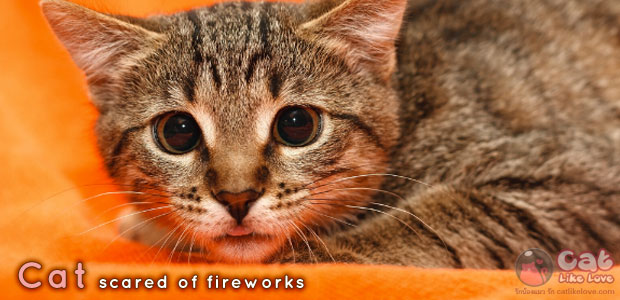 [Tips] เตรียมตัวน้องแมว รับเทศกาลลอยกระทง