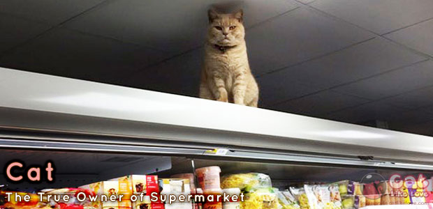 [News] แมวเหวี่ยงดังเปรี้ยง เทรนด์แรงแซงแมวหน้าบึ้ง