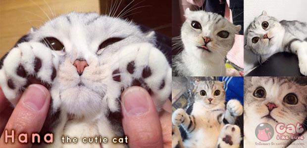 [News] ฮานะแมวเหมียวสุดแบ๊ว
