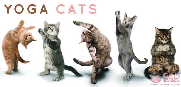 [Ent] โยคะแมวรอบโลก vs โยคะแมวที่บ้าน
