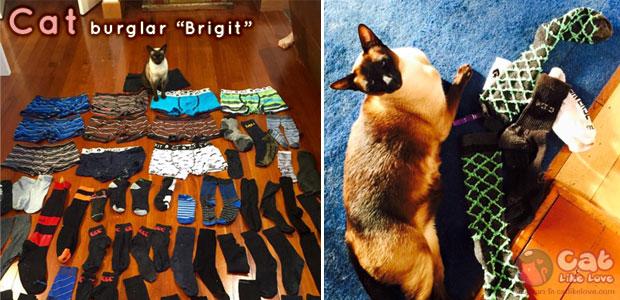 [News] รวบตัวแมวเหมียวสุดแสบ ขโมยชุดชั้นในชาย!!!