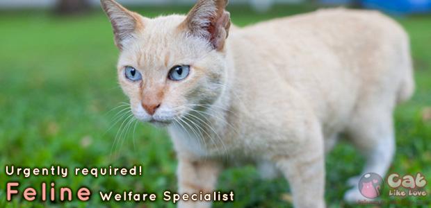 [Urgently] ด่วน!!!รับสมัคร เจ้าหน้าที่ฝ่ายสวัสดิภาพแมว ประจำสถานเอกอัครราชทูตสหรัฐอเมริกา!!!