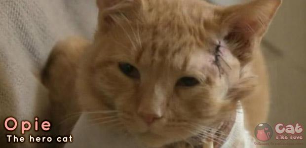 [News] แมวฮีโร่! รับกระสุนช่วยชีวิตเด็กน้อย!!!