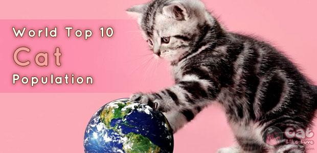 [Knw] 10 อันดับ ประเทศนี้มีแมวมากที่สุดในโลก!!!