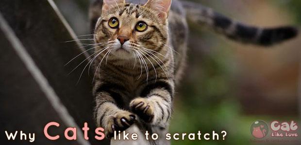 [Knw] ทำไมน้องแมวชอบฝนเล็บ ???
