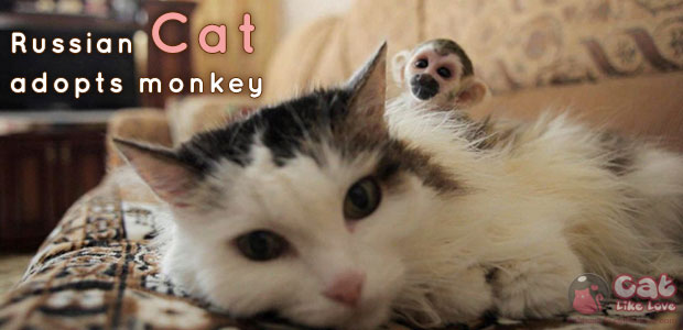 russian-cat-adopts-monkey