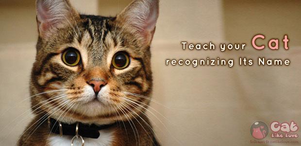 [Tips] 7 ขั้นตอน สอนแมวให้จำชื่อตัวเอง!!