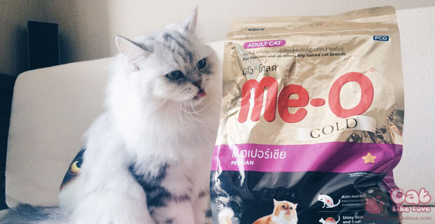 [Tips] มาดูวิธีดูแลขนน้องแมวเปอร์เซียให้สวยเงางามไปตลอดกัน