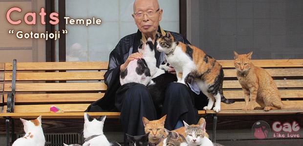 [Travel] วัดแมวเหมียว Gotanjo สำหรับคนรักแมว