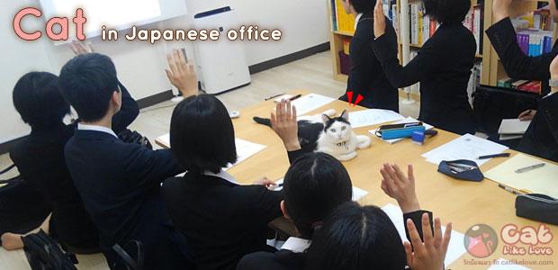 [News] บริษัทญี่ปุ่นปิ๊งไอเดีย!! เลี้ยงแมวแก้เครียด