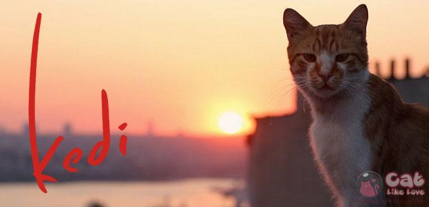 [Movie] Kedi : เมืองแมว หนังสำหรับคนรักแมว!!!