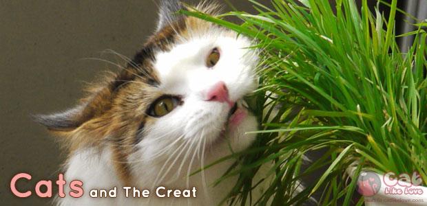 [News] ชี้แจง!! ยาเขียวไม่ได้รักษาโรคในสัตว์เลี้ยง