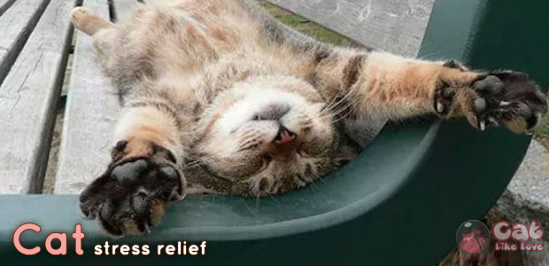 [Knw] แมวช่วยลดความเครียด-ซึมเศร้าได้!