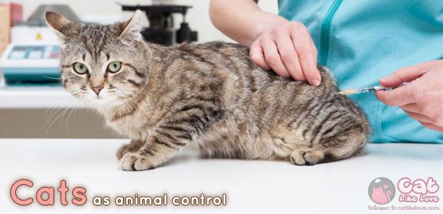 """[News] กระทรวงเกษตรฯ ออกประกาศให้ """"แมว"""" เป็นสัตว์ควบคุม"""