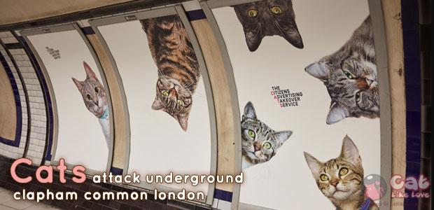[News] แคมเปญน่ารักๆ ของเจ้าแมวเหมียวที่ลอนดอน