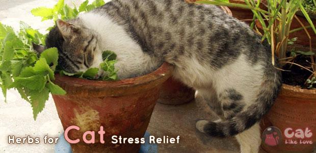[Knw] คลายเครียดให้น้องแมวด้วยสมุนไพร
