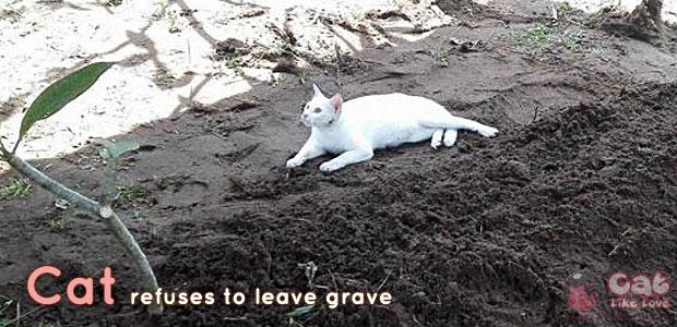 [News] แมวขาวมาร่วมงานศพเจ้านาย ไม่ยอมห่าง