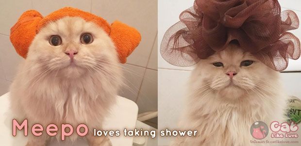 """[News] """"Meepo"""" แมวเหมียวผู้คลั่งไคล้การอาบน้ำ"""
